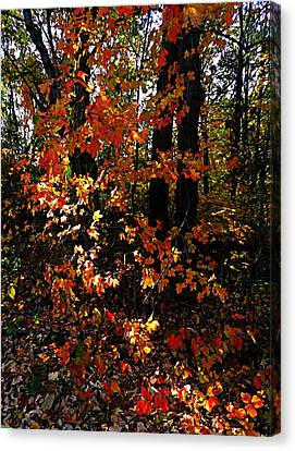 Southern Indiana Autumn Canvas Print - A Slash Of Sunlight by Julie Dant