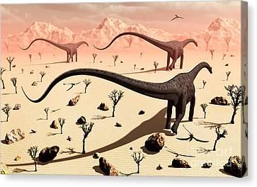 A Small Group Of Diplodocus Sauropod Canvas Print by Mark Stevenson