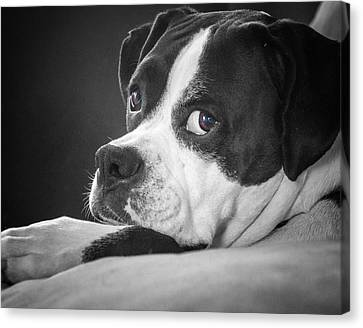 Canvas Print featuring the photograph A Soulful Expression by Steve Benefiel