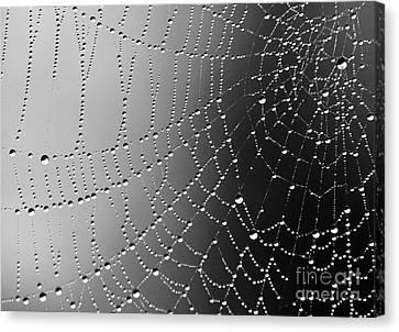 A Spider Designs The Universe Canvas Print