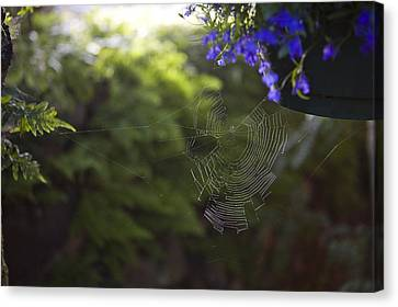 A Spider Web In A Garden Canvas Print by Taylor S. Kennedy