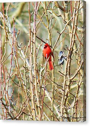 A Spot Of Red Canvas Print by Lorraine Louwerse