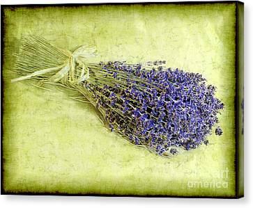 A Spray Of Lavender Canvas Print by Judi Bagwell