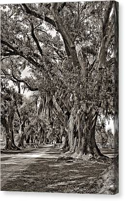 A Stroll Through Time Monochrome Canvas Print by Steve Harrington