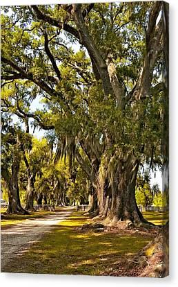 Evergreen Plantation Canvas Print - A Stroll Through Time by Steve Harrington