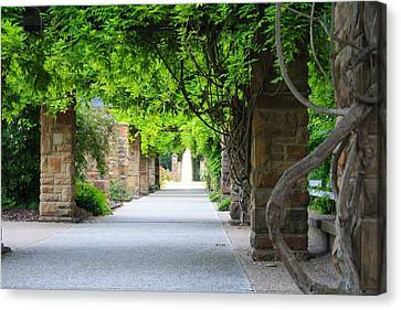 Canvas Print featuring the photograph A Stroll Under The Vines by Lynnette Johns