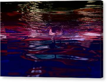 A Swimming Duck Breaks Up The Colorful Canvas Print by Stephen St. John