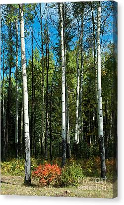 Canvas Print featuring the photograph A Touch Of Autumn by Bob and Nancy Kendrick