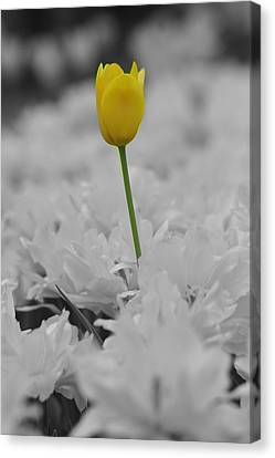 Canvas Print featuring the photograph A Touch Of Color by Renee Hardison