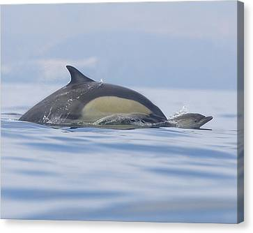 A Watchful Mother Canvas Print by Steve Munch