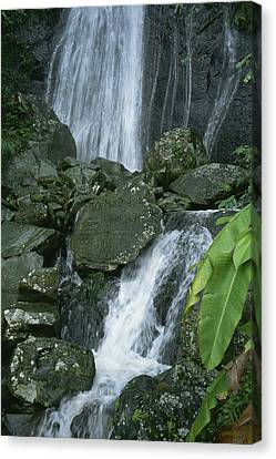A Waterfall In El Yunque, Puerto Rico Canvas Print by Taylor S. Kennedy