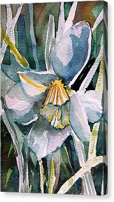 A Weepy Daffodil Canvas Print by Mindy Newman