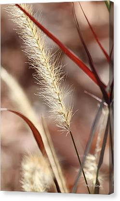 Canvas Print featuring the photograph A Whisper In The Wind by Amy Gallagher