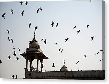 A Whole Flock Of Pigeons On The Top Of The Ramparts Of The Red Fort In New Delhi Canvas Print by Ashish Agarwal