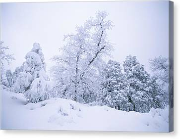 A Winter Landscape Of Snow-covered Canvas Print