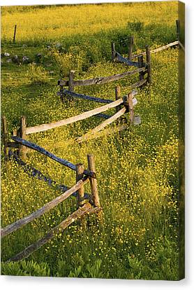 A Wooden Rail Fence Surrounded By Canvas Print by David Chapman
