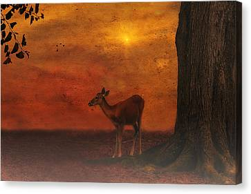 A Young Deer Canvas Print by Tom York Images