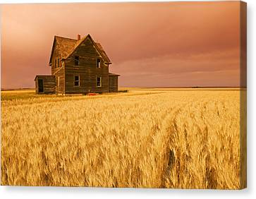 Abandoned Farm House, Wind-blown Durum Canvas Print by Dave Reede