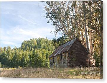 Abandoned Rustic Cabin Canvas Print