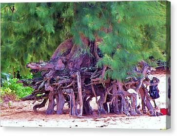 Canvas Print featuring the photograph Above Ground Roots On Tamarisk Tree  by Michele Penner