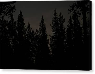 Above The Pines Canvas Print by Arlyn Petrie