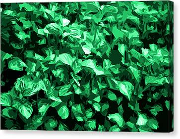 Canvas Print featuring the photograph Abstract Greeen by Serene Maisey