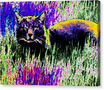 Abstract Of Tabby Canvas Print