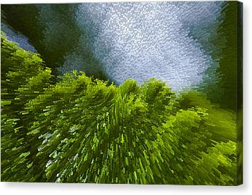 Abstract Pine Canvas Print