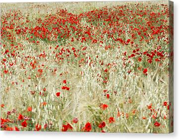 Abstract Poppies Canvas Print by Guido Montanes Castillo