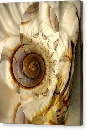 Abstract Seashell Canvas Print by Shirley Sirois