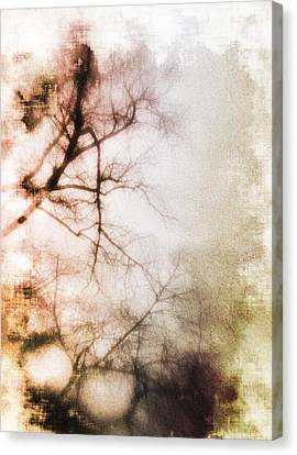 Abstract Trees Canvas Print by David Ridley
