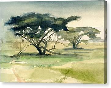 Acacia Canvas Print by Stephanie Aarons