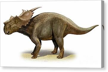 Achelousaurus Horneri, A Prehistoric Canvas Print by Sergey Krasovskiy
