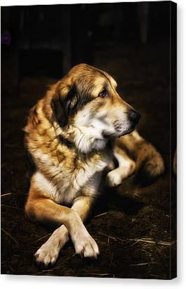 Adam - The Loving Dog Canvas Print