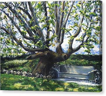 Adamson Home Tree Canvas Print by Randy Sprout