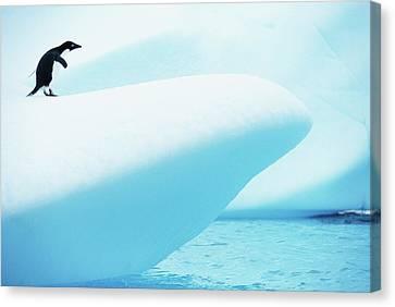 Adelie Penguin (pygoscelis Adeliae) Standing On Iceberg Canvas Print by Paul Souders