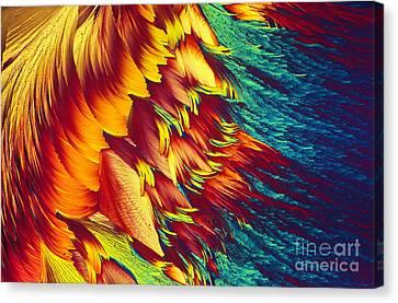 Intracellular Energy Canvas Print - Adenosine Triphosphate by Michael W. Davidson