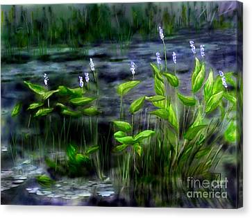 Adirondacks Natural Wetlands Pickeral Plant Canvas Print by Judy Filarecki