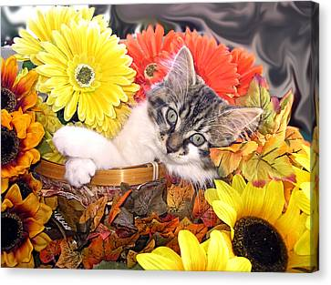 Adorable Baby Cat - Cool Kitten Chilling In A Flower Basket - Thanksgiving Kitty With Paws Crossed Canvas Print by Chantal PhotoPix