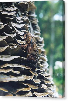 Canvas Print featuring the photograph Adventurous Toad by Gerald Strine