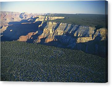 Aerial View Of Kaibab Canvas Print by Norbert Rosing