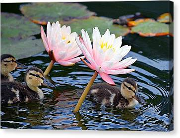 Afloat Among Lillies Canvas Print by Fraida Gutovich