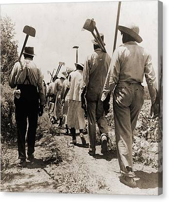 African American Cotton Hoers Worked Canvas Print by Everett