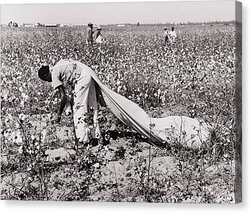 African American Day Laborer Picking Canvas Print by Everett