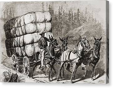 African American Teamster Transporting Canvas Print by Everett