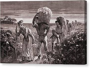 African Americans Leaving A Cotton Canvas Print by Everett