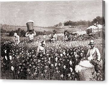 African Americans Picking Cotton Canvas Print by Everett