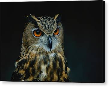 African Eagle Owls Are Among The 200 Canvas Print by Joel Sartore