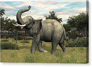 African Elephant Canvas Print by Walter Colvin