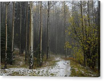 After A Hail Storm In The Santa Fe Canvas Print by Raul Touzon